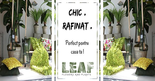 LeafShop cashback - cumpara flori si plante artificiale cu aspect realist si castiga bani online